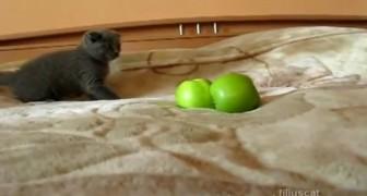 L'esilarante scontro all'ultimo sangue tra il gattino e le mele