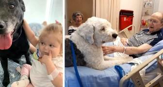 Questo ospedale permette ai pazienti di ricevere visite dai loro animali domestici: le foto valgono più di mille parole