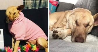 Esta é Maggie a cachorra maravilha que ajuda os pacientes a superar as dificuldades da vida