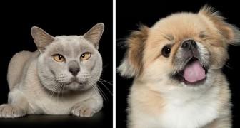 Una fotografa cattura la bellezza degli animali imperfetti per aiutarli a trovare una famiglia