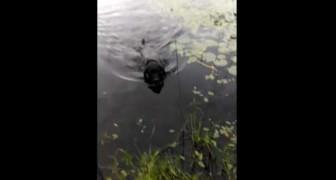 Le chien héros qui sauve un oiseau d'une mort certaine