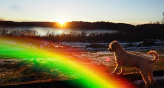 Where do our beloved pets go when they leave us? Here is the legend of the Rainbow Bridge ...