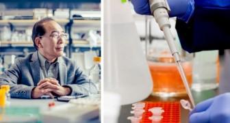 In Giappone il primo esperimento per far crescere un embrione ibrido uomo-animale