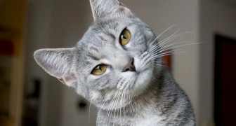 Als je een kat in huis haalt dan wordt hij je beschermengel, je bewaker