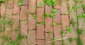 Aceto, sapone e sale: tre semplici ingredienti per evitare che crescano le erbacce in giardino