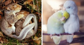 Desssa 18 par av förälskade djur verkar vara tagna ur ett bröllopsalbum