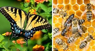 Iniziate a dire addio agli insetti: nei prossimi anni quasi la metà delle specie sarà a rischio estinzione