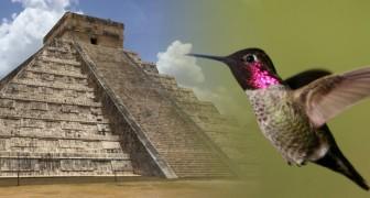 Secondo i Maya il colibrì è un animale magico: ecco l'affascinante leggenda