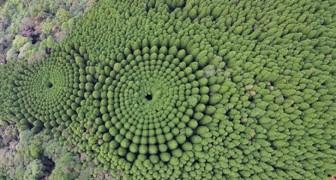 Au Japon, il existe une forêt où les arbres dessinent des cercles parfaits : voici le mystère dévoilé