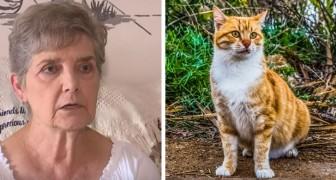 Deze vrouw moet misschien naar de gevangenis omdat ze zwerfkatten te eten heeft gegeven