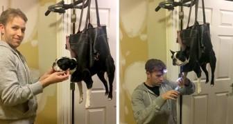 Il cane non vuole tagliarsi le unghie, ma il padrone ha un'idea geniale per non farlo scappare!