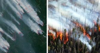 En Sibérie, une zone plus grande que le Portugal est partie en fumée et le gouvernement n'a (presque) rien fait