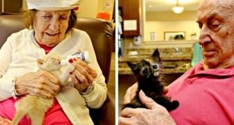 Nesta clínica os pacientes idosos recuperam a memória cuidando de gatinhos que precisam de ajuda