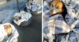 Dans cette gare routière, on protège les chiens errants du froid avec des couvertures et des pneus