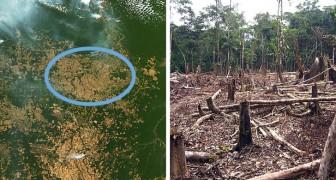 Solo a luglio 2019 la deforestazione in Amazzonia è aumentata del 278%