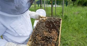 Im Jahr 2019 war die Honigernte in Italien Null, und die Schuld liegt beim Klimawandel