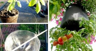 Come trasformare il vostro balcone in un orto coltivando i pomodori in bottiglie di plastica