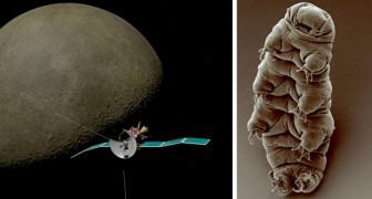I tardigradi, gli organismi più resistenti al mondo, sono probabilmente sbarcati sulla Luna