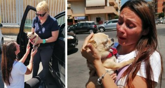 She finds her dog after 8 years! Here is the moving story of this woman and her chihuahua, Maya