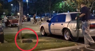 An abandoned dog is found in a parking lot, what these people do to save it, is incredible!