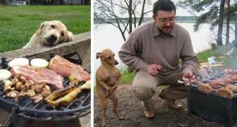 Perros que mendigan comida: 14 imágenes divertidas que los propietarios de perros entenderán al instante