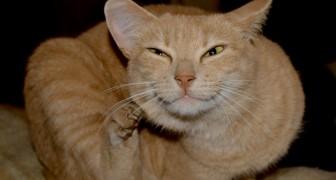 Un nuovo vaccino potrebbe ridurre gli effetti dell'allergia ai gatti una volta per tutte
