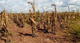 Die Vereinten Nationen warnen: Der Klimawandel wird Lebensmittel immer teurer machen