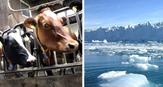 Una dieta con meno carne può combattere i cambiamenti climatici: parola di un rapporto Onu