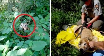 Ces randonneurs trouvent dans les bois un chien porté disparu depuis 11 jours : la joie est indescriptible