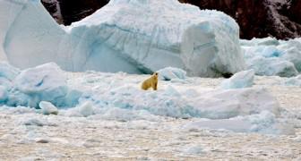 Das grönländische Eis schmilzt 50 Jahre früher als erwartet