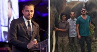 Leonardo DiCaprio heeft 100 miljoen dollar gedoneerd om nee te zeggen tegen de jacht