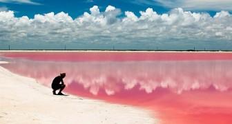 Questa laguna dalle sfumature rosa si trova in Messico, ma sembra uscita da una fiaba