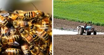 Il Brasile ha perso mezzo miliardo di api in soli 3 mesi: non si ferma la strage dei pesticidi