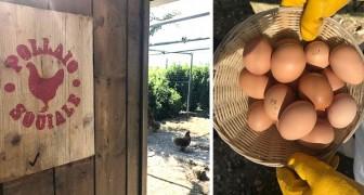 In questa cooperativa puoi adottare galline allevate da ragazzi disabili: ecco il Pollaio Sociale