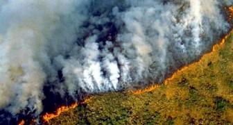 De Amazone staat in brand en de rook veroorzaakt door de branden is zelfs vanuit de ruimte zichtbaar