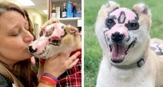 A história de Taka, o cachorro que escapou de um incêndio e agora dá alegria para quem precisa