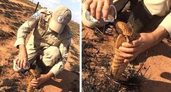 Questo pompiere disseta un cucciolo di armadillo scampato ai roghi in Amazzonia