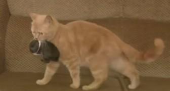 Mamãe gato e seu filhote adotivo