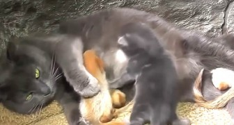 This cat has adopted four orphaned squirrels and treats them as if they were her own kittens!