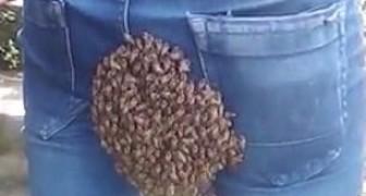 Une colonie d'abeilles s'installe sur le dos de cet homme alors qu'il conduisait