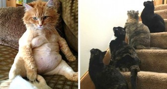 Deze 15 grappige kattenfoto's laten zien dat het hebben van een kat iets geweldigs is!