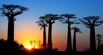 Pflanzen sterben 350 mal schneller aus als in der Vergangenheit: Die Wissenschaft bestätigt es