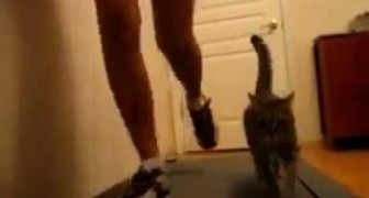 Girl with her cat on treadmill