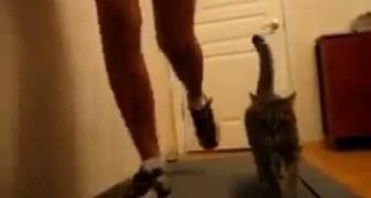 Mädchen und ihre Katze auf dem Laufband