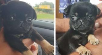 Este cachorro foi abandonado em um saquinho de plástico, mas uma mulher conseguiu salvá-lo