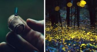 Non ci sono più le lucciole: anche questi affascinanti insetti luminosi rischiano l'estinzione