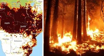En plus de l'Amérique du Sud, l'Afrique brûle aussi : les incendies en Angola et au Congo sont deux fois plus importants que ceux de l'Amazonie