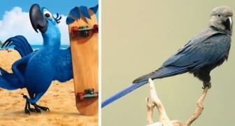 Vaarwel Spix' ara: de blauwe papegaai die de film Rio inspireerde, bestaat niet meer in de natuur