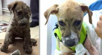Den här hunden blev slagen och nerdränkt i lim, men historien får ett lyckligt slut trots allt