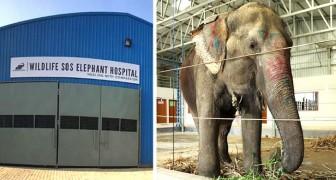 Nasce in India il primo ospedale che cura il corpo e lo spirito degli elefanti maltrattati